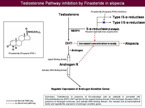 5-alpha-reductase inhibition.jpeg